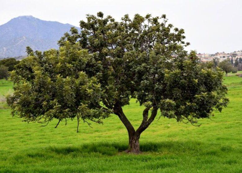 Características y criterios de selección de árboles para propagación