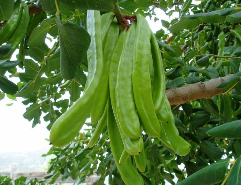 Insectos plagas en frutos y semillas